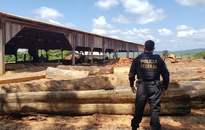Two arrested for alleged fraud of DOF system and illegal storage and sale of timber in Tartarugalzinho